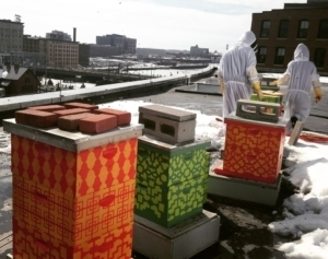 Bees can be raised in almost any urban environment